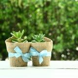 Succulents in der Liebe Stockbilder