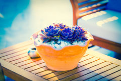 Succulents -Echeveria runyonii Rose Stock Photography
