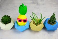 Succulents eingemacht in den konkreten Töpfen und in der lustigen Ananas stockbild