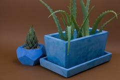 Succulents eingemacht in gemaltem konkretem Topf auf braunem Hintergrund lizenzfreie stockfotografie