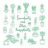 Succulents en andere houseplants Royalty-vrije Stock Foto's