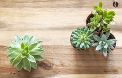 Succulents en fondo de madera fotos de archivo