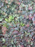 Succulents en un jardín Imagenes de archivo