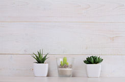 Succulents et cactus dans des pots dessus au-dessus du fond en bois blanc Décoration intérieure à la maison Style chic scandinave Photographie stock