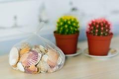 Succulents et coquilles photographie stock