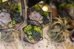 Succulents in florariums. Creativity of growing succulents and cacti, beautiful compositions. Landscape in a geomeric. Aquarium. Real scene in the flower shop royalty free stock photo