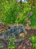 Succulent display stock photo