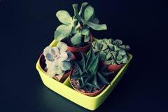 Succulents, green plant,smaller plant, little plant stock photo