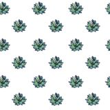 Green small succulents watercolor royalty free illustration