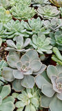 Succulents. A group of desert plants Stock Image