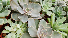 Succulents. A group of desert plants Stock Images
