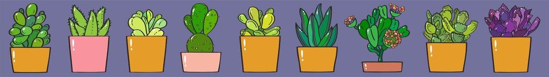 Succulents horizontal banner vector illustration stock photo
