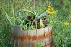 Succulents im Fass Lizenzfreie Stockfotos