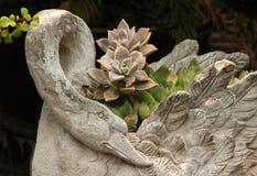 Succulents im Pflanzer lizenzfreie stockbilder