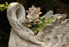 Succulents In Planter Royalty Free Stock Images