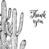 Succulents linéaires d'american national standard de cactus de croquis Photo libre de droits