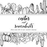 Succulents linéaires d'american national standard de cactus de croquis illustration de vecteur