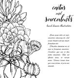 Succulents linéaires d'american national standard de cactus de croquis Photographie stock