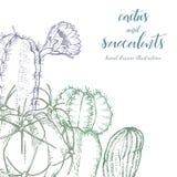 Succulents linéaires d'american national standard de cactus de croquis Image stock