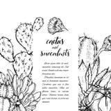 Succulents linéaires d'american national standard de cactus de croquis Photographie stock libre de droits