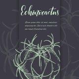 Succulents linéaires d'american national standard de cactus de croquis Images libres de droits