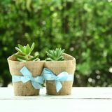 Succulents in love. Two lovers succulent Stock Images