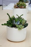 Succulents. Many Succulents are in the pot Stock Images