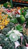 Succulent market. Succulents market plants Stock Photography