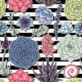 Succulents naadloos gestreept patroon Succulent ornament met sri Royalty-vrije Stock Afbeelding