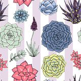 Succulents naadloos gestreept patroon Succulent ornament met sri Stock Foto