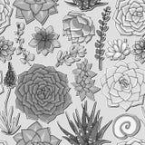Succulents naadloos patroon Succulent ornament Stock Foto