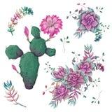 succulents Os cactos entregam tirado em um fundo branco Flores no deserto Plantas carnudas de tiragem do vetor ilustração royalty free