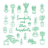 Succulents and other houseplants. Royalty Free Stock Photos