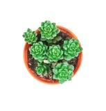 Succulents pflanzen im Topf auf weißen Hintergrund, Unkosten oder Oberseite VI lizenzfreies stockfoto