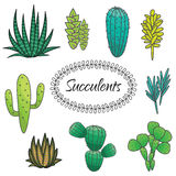 Succulents plant vector set. Botanical green. Succulents cacti plant vector set. Botanical green desert flora collection. Home garden cartoon cactuses royalty free illustration