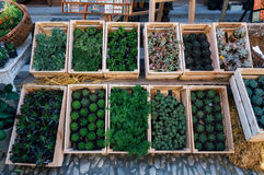 Succulents plants in wooden boxes at flower market Stock Photos