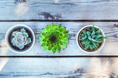 Succulents in pot vintage wooden table background with copy space, top view stock photography