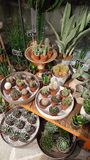 Succulents pots. Buy one of the succulents royalty free stock photos