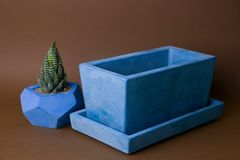Succulents potted in painted concrete pot stock photography