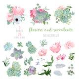 Succulents, protea, подняли, ветреница, echeveria, гортензия, собрание вектора декоративных заводов большое