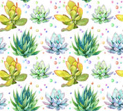 Succulents. Repeating pattern. Watercolor Royalty Free Stock Image