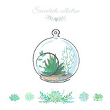 Succulents in round glass bowl. Floral composition with succulents in decorative glass bowl, vector floral illustration Royalty Free Stock Images