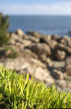 Succulents by the sea Stock Image