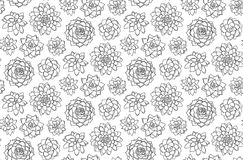 Succulents seamless pattern succulent beautiful background. Vect Royalty Free Stock Image