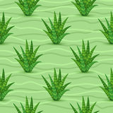 Succulents seamless pattern Stock Photo