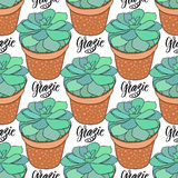 Succulents seamless pattern. Vector illustration. Home decoration. Grazie thank you in Italian. Stock Photo