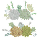 Succulents set. Collection decorative floral design elements for wedding invitations and birthday cards. Royalty Free Stock Images
