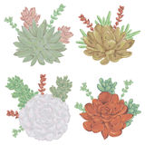 Succulents set. Collection decorative floral design elements for wedding invitations and birthday cards. Royalty Free Stock Photos