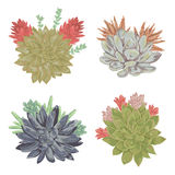 Succulents set. Collection decorative floral design elements for wedding invitations and birthday cards. Stock Photos