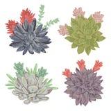 Succulents set. Collection decorative floral design elements Stock Photography